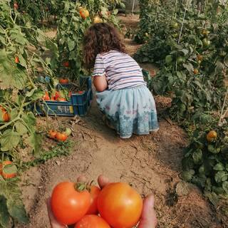 One with nature in life and in designThese are tomato plantations from our family's sustainable and organic garden 🌟#tomatoes #ZAMT #ZAMTberlin #sustainability #ecofriendly #sustainable #sustainableliving #sustainablefashion #slowfashion #consciousfashion #buylesswearmore #buylessbutbetter #qualityoverquantity #inspiration #berlinbrand #organicfarming #sustainablefarming#roots #demeter #vegtanned #tradition #bagdesign #family #ethicalfashion #smallbusiness #smallbrand #minimalist #madewithlove #supportsmalllabels